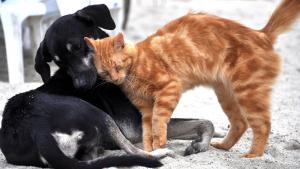 Guia grátis para reconhecimento e tratamento da dor em cães e gatos