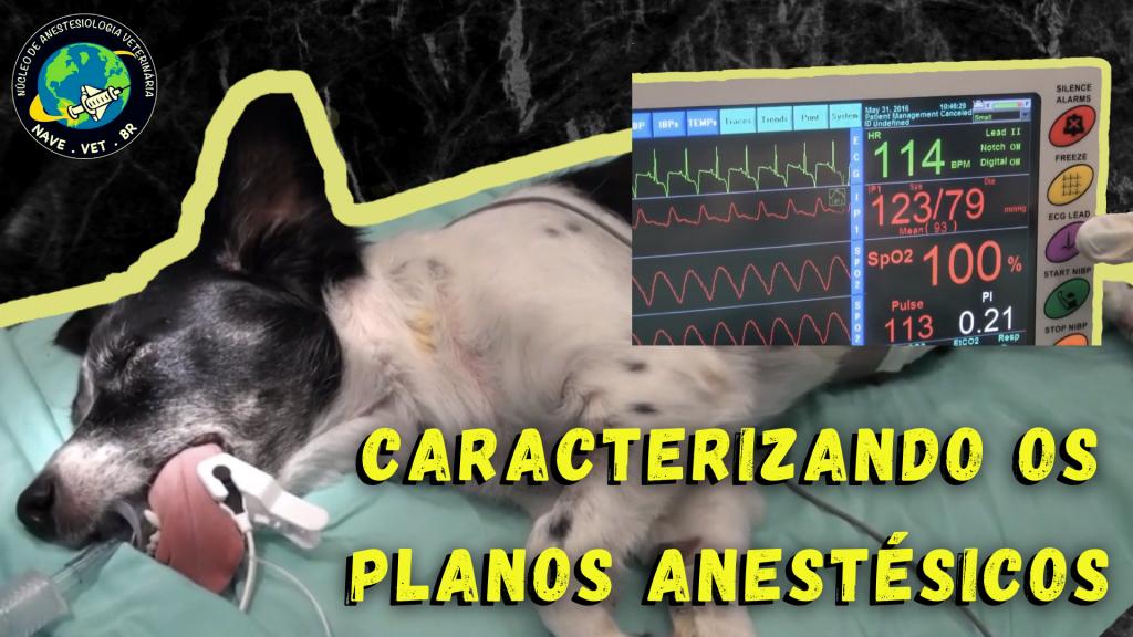 Planos Anestésicos em Cães