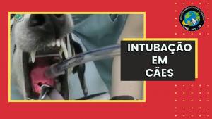 Intubação em cães