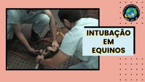 Intubação em equinos