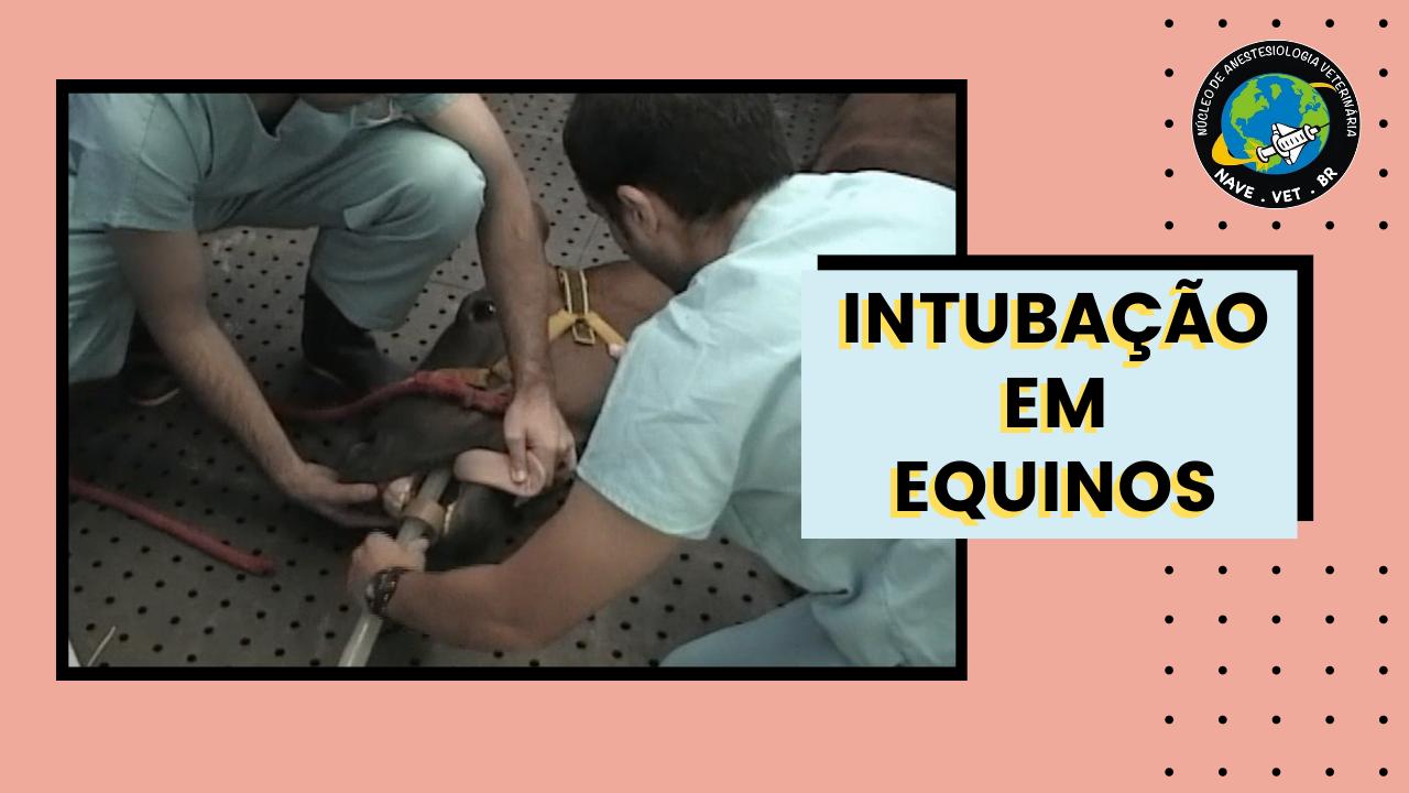 Intubação endotraqueal em equino