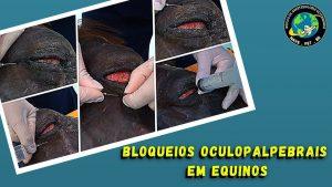 Bloqueios oculopalpebrais em equinos