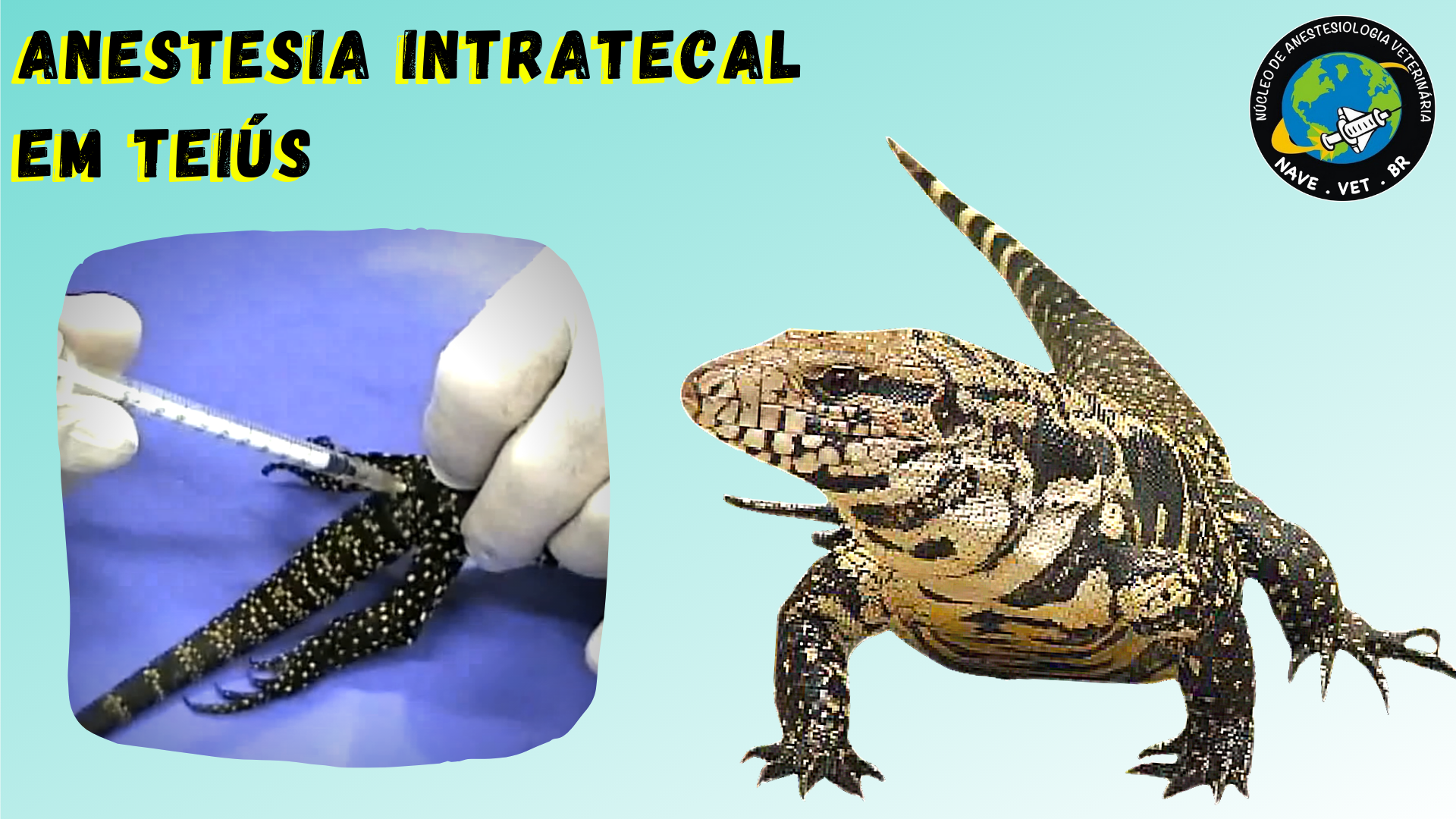 Anestesia Intratecal em Teiús (Salvator merianae)