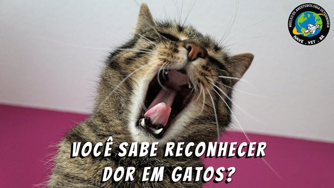 Reconhecimento da dor aguda em gatos