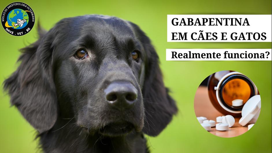 Gabapentina em cães e gatos: realmente funciona?