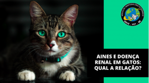 AINES e doença renal em gatos: Qual a relação?