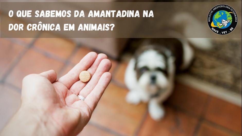O que sabemos da amantadina na dor crônica em animais?