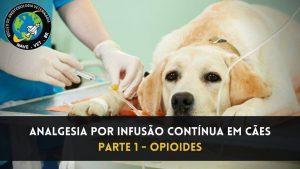 Analgesia por infusão contínua em cães – Opioides