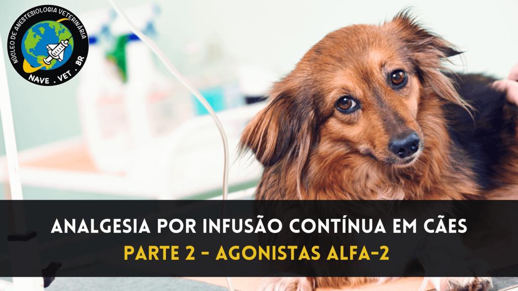 Analgesia por infusão contínua em cães – Agonistas alfa-2 adrenérgicos